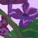 Close up detail of Lilacs