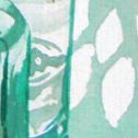 Close up detail of Bellis