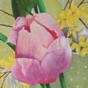 Close up detail of Tulips