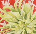 Close up detail of Dahlias