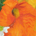 Close up detail of Orange Posy
