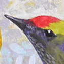 Close up detail of Songbird