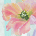 Close up detail of Apricot Beauty: original painting
