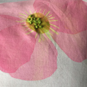 Close up detail of Poppy Pillow